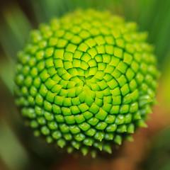 Pine Needle patterns (Mark Wasteney) Tags: gorgeousgreenthursday hggt pineneedles patternss greens nature squareformat
