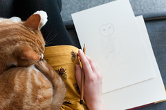 Day 72, Year 12. (evilibby) Tags: 365 36512 365days 365days12 libby barnabee cat gingercat beedress hand draw drawing sketchbook livingroom