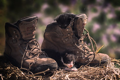 Dos pares (amjs63) Tags: zapatos viejo gatos