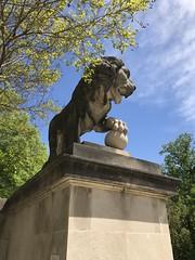 Lion at the Baltimore Museum of Art - April 2019 (litlesam1) Tags: lions spring2019 april2019