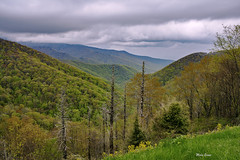 Spring (mevans4272) Tags: mountains parkway ridge blue flowers trees spring forest