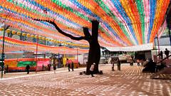 Big tree with Lanterns in Buddhist Temple (kitsunekuma) Tags: fujinon fuji fujifilm xpro1 xf xf18mmf2 classic chrome temple beautiful colorful color traditional korea korean seoul jogyesa lanterns buddhism buddhist shrine tree shadow shadows light