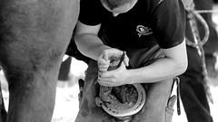 Work (patrick_milan) Tags: hands horse marechal ferrant blacksmith farrier treouergat plouguin finistere