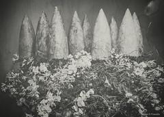Flower Study in Monochrome, no. 20_52_2019 (a g a t a d p r a w d z i k) Tags: flowers fineart photography monochrome agatadprawdzik textures toned flowershow nj ppc princetonart canon 6d