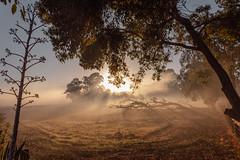 IMG_4337 (alextaz2) Tags: swan valley perth australia caversham farm vintage car sunrise landscape