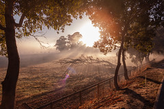IMG_4340 (alextaz2) Tags: swan valley perth australia caversham farm vintage car sunrise landscape