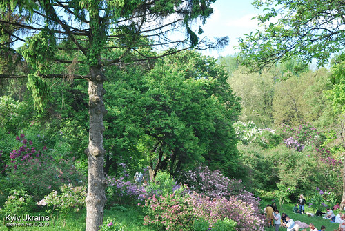 Київ, Ботанічний сад імені Гришка  Цвіте бузок InterNetri Ukraine 79