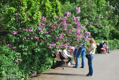 Київ, Ботанічний сад імені Гришка  Цвіте бузок InterNetri Ukraine 04