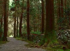 Paths of Kyoto (lebre.jaime) Tags: japan kyoto tree path hasselblad 503cx planar cf2880 analogic film120 fujiprovia rdp iso100 mf mediumformat nature epson v600 affinity affinityphoto