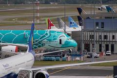 A380-841 All Nippon Airways // msn : 263 (Luc_slf) Tags: a380 ana allniponairways kai livery delivery deliverycenter blue turtle smile airbus aéronautique aeronautics aeroport aeroporttoulouseblagnac toulouseairport toulouse blagnac toulouseblagnac