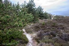 Heide04 (manfredkirschey) Tags: römö rømø insel dänemark nordsee nordseeinsel heide heidelandschaft