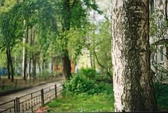 Smena 8M bokeh (v0lga) Tags: bokeh smena 8m summer russia