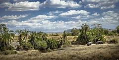HIPPOS (juanjo_rueda) Tags: hippos serengeti tanzania landscape africa safari wildlife