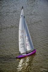 T37 Model Yacht Racing - London's Landing (SonjaPetersonPh♡tography) Tags: richmond bc britishcolumbia canada nikon nikond5300 nikonafsdxnikkor18300mmf3556gedvr fraserriver modelyachts sailing stevestonchannel river boats sailboats water t37 t37modelyachtracing racing yachtracing racingsloops pnw pacificnorthwest fleets