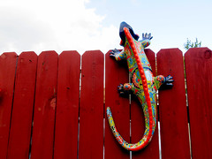 Reaching For The Sky (Vicki LW) Tags: fence smileonsaturday fancyfence lizard 100xthe2019edition 100x2019 image43100