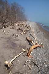 Storm Trees (peterkelly) Tags: digital canon 6d northamerica ontario canada pointpeleenationalpark beach forest trees blue sky sand log lakeerie shoreline shore driftwood