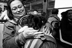 (Just My Little Hideaway) (Robbie McIntosh) Tags: leicam9p leica m9p rangefinder streetphotography 35mm leicam autaut candid strangers leicaelmarit28mmf28iii elmarit28mmf28iii elmarit 28mm blackandwhite napoli dog