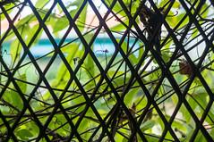 (kuuan) Tags: mf minolta rokkor mrokkorf240mm leica f2 40mm 240 f240mm minoltamrokkor minoltamrokkorf240mm apsc sonynex5n vietnam saigon hcmc green city