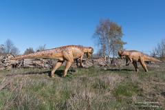 Dinopark Mölchow (Frank Guschmann) Tags: dinopark mölschow usedom mecklenburgvorpommern deutschland frankguschmann nikond500 d500 nikon insel