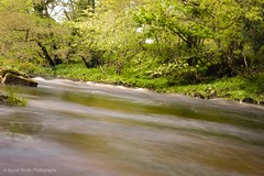 Hudswell forests richmond (danielbooth3) Tags: richmond river riverswale northyorkshire yorkshire visityorkshire visitrichmond