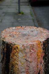 Eco Murder (teltone) Tags: tree avenue liverpool murder waterloo sefton death vandalism stump