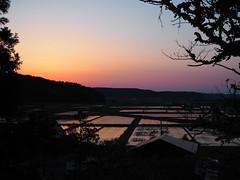 rice field (murozo) Tags: rice field evening sky railway silhouette yurihonjo akita japan 田圃 夕方 空 線路 由利本荘 秋田 日本