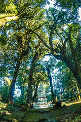 Kew Mae Pan,Doi inthanon national park,Chiangmai,Thailand (www.icon0.com) Tags: inthanon scene beautiful trail mountain view thailand season pan sky natural old silhouettes adventure background valley male doi fog forest sunrise tourism winter skyline sun twilight mist summer national terrace man kew park himalaya nature asia peak orange outdoor hill horizon environment wooden sunset chiangmai time travel fence wild landscape