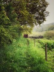 A gate (Speeesh) Tags: pathway leaves trees green tåstrup danmark denmark