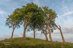 DSC02988 (davyskin46) Tags: sony slt sonydt1650f28ssm a77ii copthill burialmound historical trees