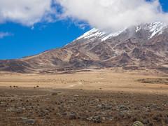 The saddle, Kilimanjaro NP, Tanzania (Amdelsur) Tags: parcdukilimandjaro continentsetpays tanzanie afrique africa kilimanjaronationalpark tz tza tanzania kilimandjaro