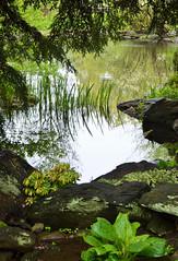 Rock Garden (KaDeWeGirl) Tags: newyorkcity bronx nybg botanical garden reflection rockgarden green pond trees