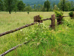 Fence (Mario in arte Akeu) Tags: smileonsaturday fancyfence fence nature flower green