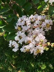 Flowers (NIKONIANO) Tags: