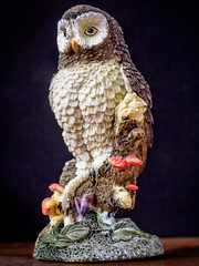 tall owl (wwnorm) Tags: figurines macro naturallight owls tabletop windowlight