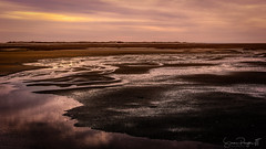 String Theory (Simmie | Reagor - Simmulated.com) Tags: 2019 capecod connecticutphotographer d750 evening landscape landscapephotographer longexposure magenta massachusetts may naturephotographer newengland nikon northeast provincetowncauseway seascape spring sunset calm digital lowtide pastel provincetown unitedstatesofamerica