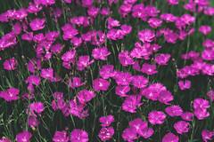 Flower wonderland (Craig McKernan) Tags: flowers canon5d ef24105mmf4lisusm