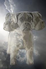 Cerberus in the Clouds (blackcatcraft) Tags: cerberus threeheadsarebetterthanone dog surrealism