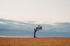 Tree (Gary.Boal) Tags: belfast northernireland ireland tree