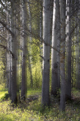 Kevätilta (lpyhnen) Tags: kasvit puut valo kevät monivalotus