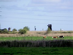 Toft Monks, Haddiscoe, and Fritton Marsh Mill, Norfolk (flicky@flickr) Tags: toftmonks haddiscoe norfolk fritton windmill windpump tower mill drainage
