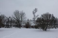 Tähtitorninmäki 10 (sohvimus) Tags: helsinki helsingfors talvi lumi vinter tähtitorninmäki snow winter hiver suomi finland sneeuw ullanlinna ulrikasborg tähtitorninvuori