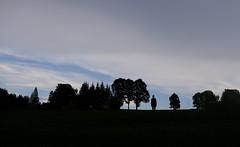 Human Tree (CoolMcFlash) Tags: silhouette tree fujifilm forest sky nature xt2 konturen baum bäume natur person standing stehen himmel fotografie photography xf18135mmf3556r lm ois wr