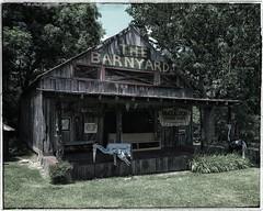 The Cabin in the Barnyard | Fischer Crossroads | Fort Payne, Alabama (steveartist) Tags: thebarnyard fischercrossroads fortpayneal iphonese snapseed building woodenbuilding weatheredwood trees grass shrubs signs metaljunksculptures stevefrenkelphoto cabin porch