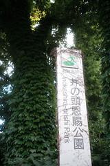 DSCF0185 (digitalbear) Tags: fujifilm xt30 carl zeiss biogon 28mm f28 contax kyocera inokashira park kichijoji tokyo japan harmonica yokocho