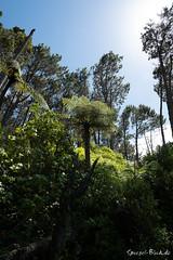 "New Zealand - Coromandel (Ineound) Tags: neuseeland newzealand spiegel spiegelblick xpro2 blick spiegelblickde new zealand fujinon xc1545mm f3556 ois 1545mm pancake fujifilm fuji xpro rangefinder erf ""spiegelblickde"" aotearoa landscape landschaft natur nature coast velvia"