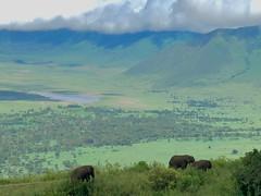 (晒晒太阳不长虫) Tags: tanzania ngorongoro elephant serenasafarilodge