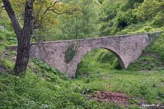 Anatoli (kzappaster) Tags: sony sonya7 a7 24105mm fe24105mmf4goss mirrorless compactsystemcamera bridge stonebridge anatoli larissa thessaly greece green
