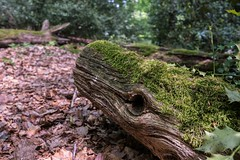 Schnappi. (die Friederike) Tags: fujifilm wandern hiking neanderlandsteig