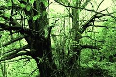 DSC_0053mod2 (pedrop61) Tags: boschi alberi primavera