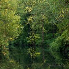 Quiétude (Olivier_1954) Tags: charleroi natureetpaysages crpc montsurmarchienne végétaux arbre eau flore rivière
